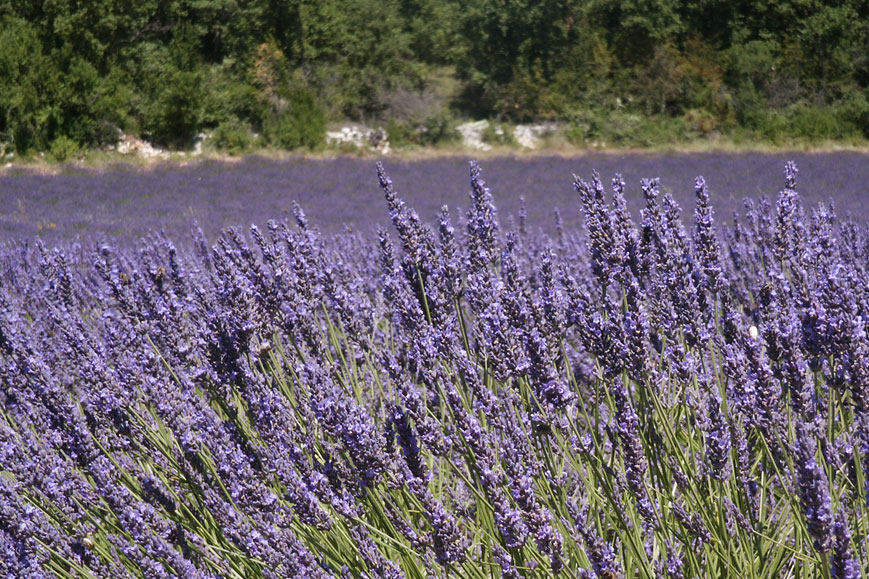 Gay friendly bed breakfast south france room welcome garden lavender ground